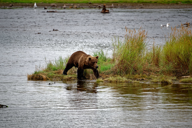 Katmai National Park Has a Beauty to Stir a Thirst for Adventure