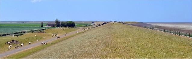 Sheep on the Sedyk (Het Wad - UNESCO)