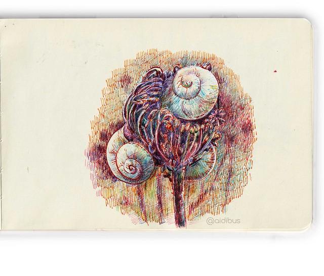 planta-con-caracoles