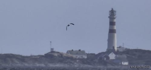 Seagull at sea