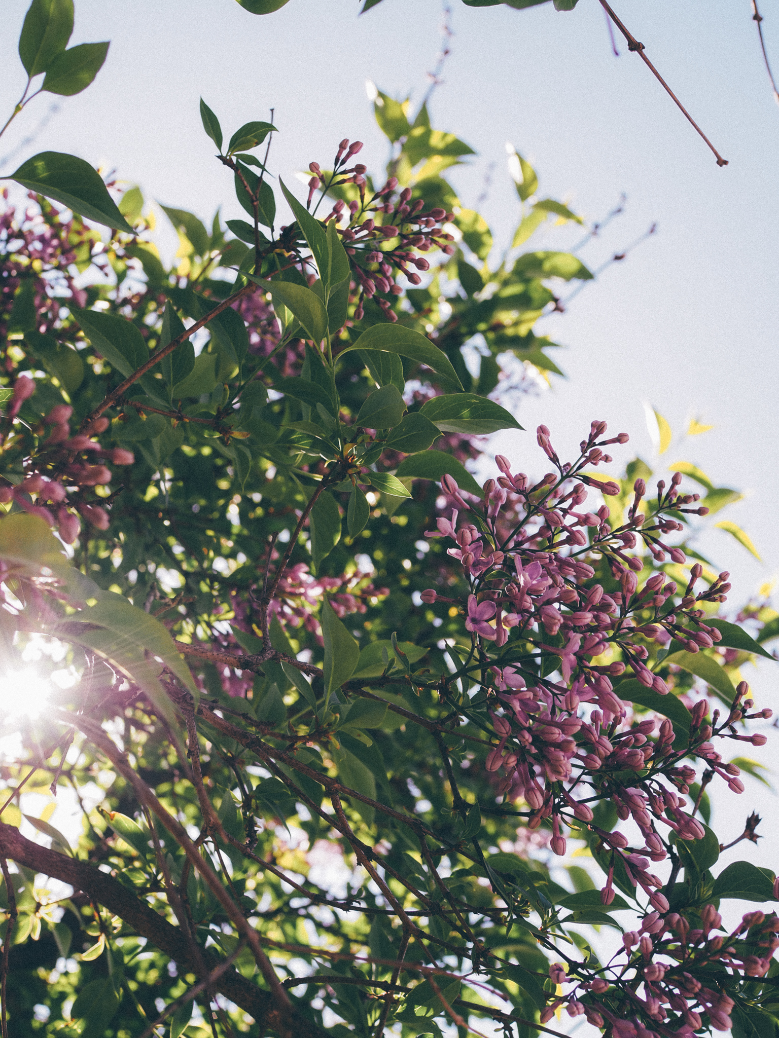 kukkia5