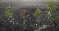 Agarwood Tree v2