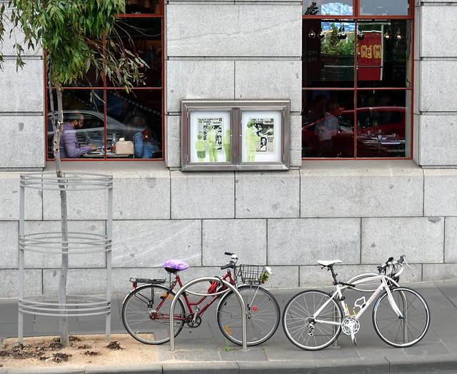 Windows, bicycles and a tree
