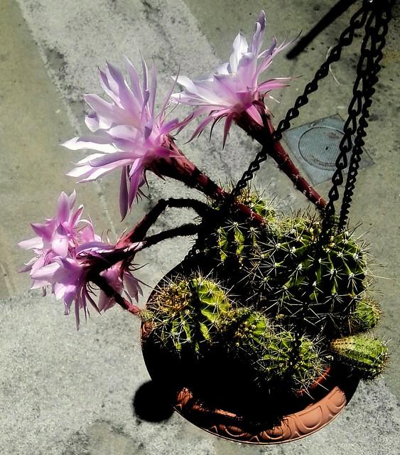 In fiore