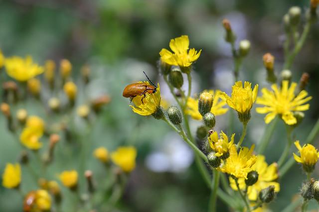 Les insectes au travail..Saint-Cassien.. Zoom Press L