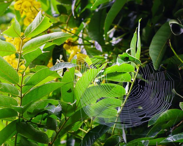 Life of a spider La vida de una araña