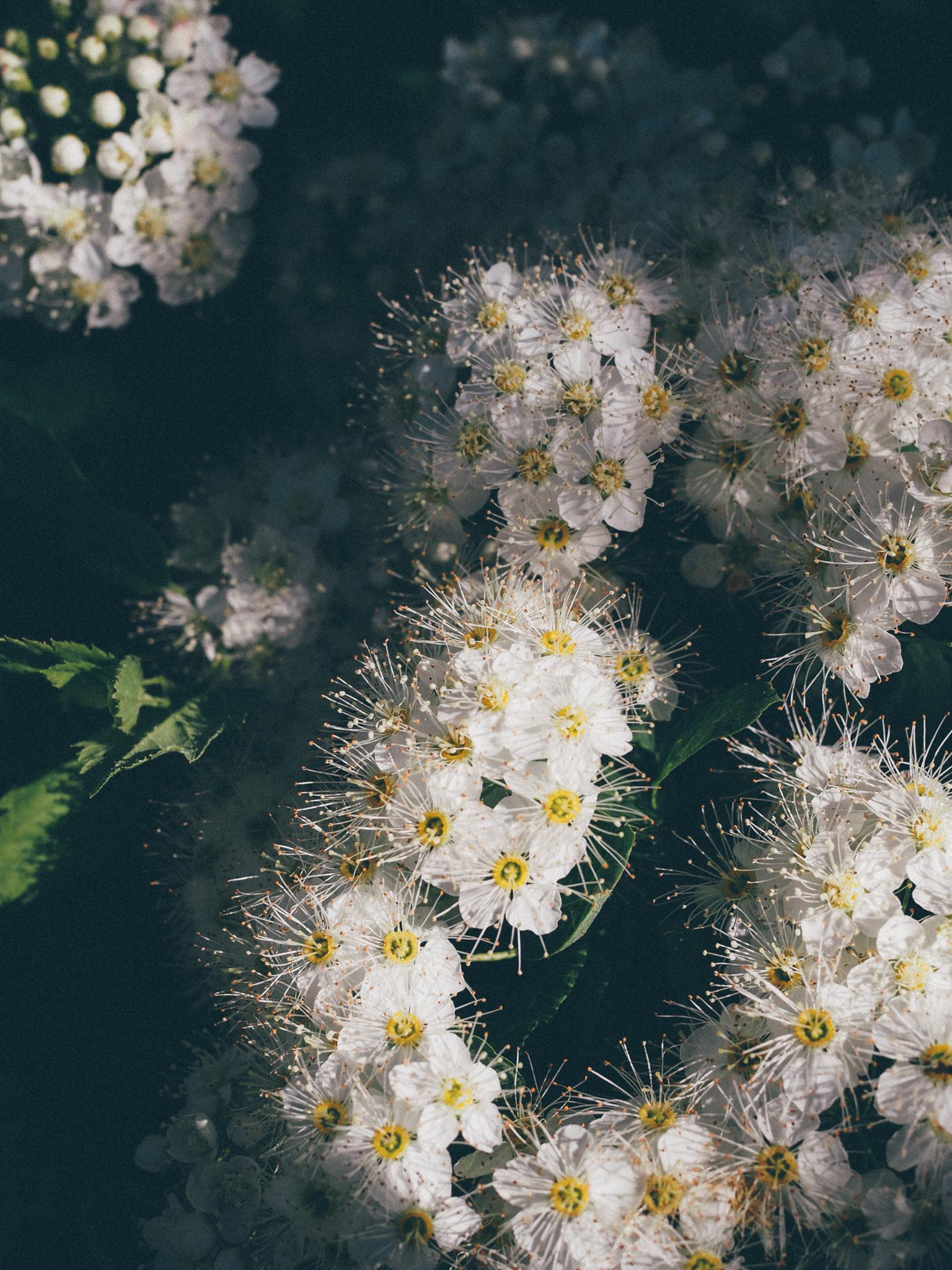 kukkia9