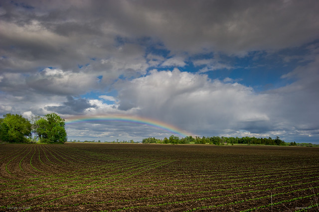 Rainbow in a country field