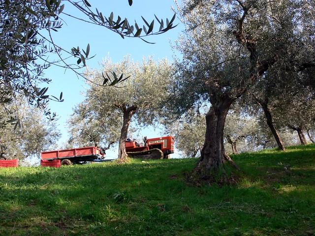 viaggio in italia 089