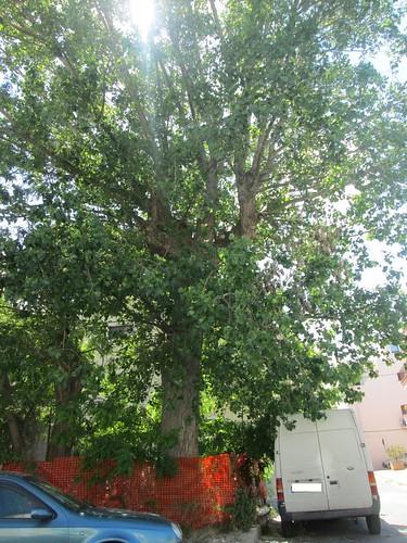 abbattimento alberi via donnola