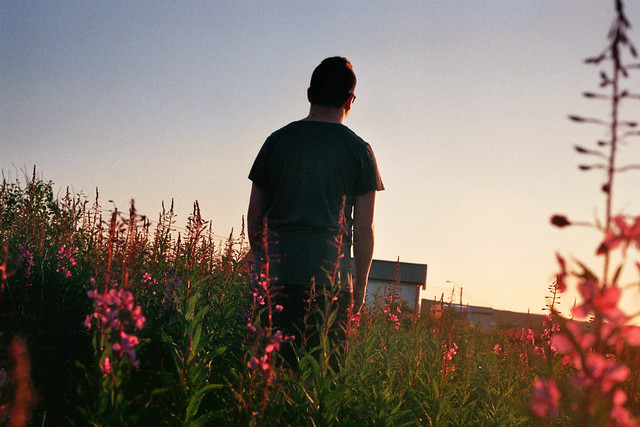 Amongst the Fireweed II