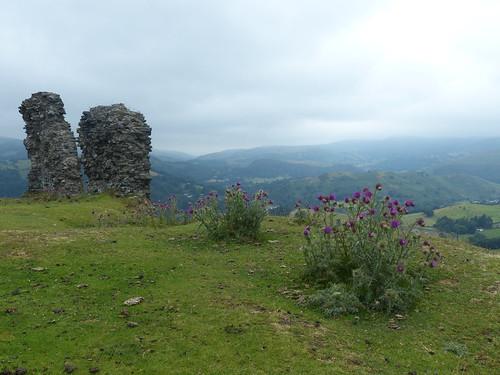 eu wales cymru llangollen ruin remains walls ruïne burcht castle castelldinasbrân plant flower thistle distel landscape view hill
