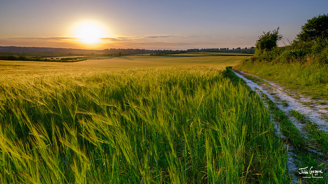 Summer sunset over wheat field near Winchester, UK