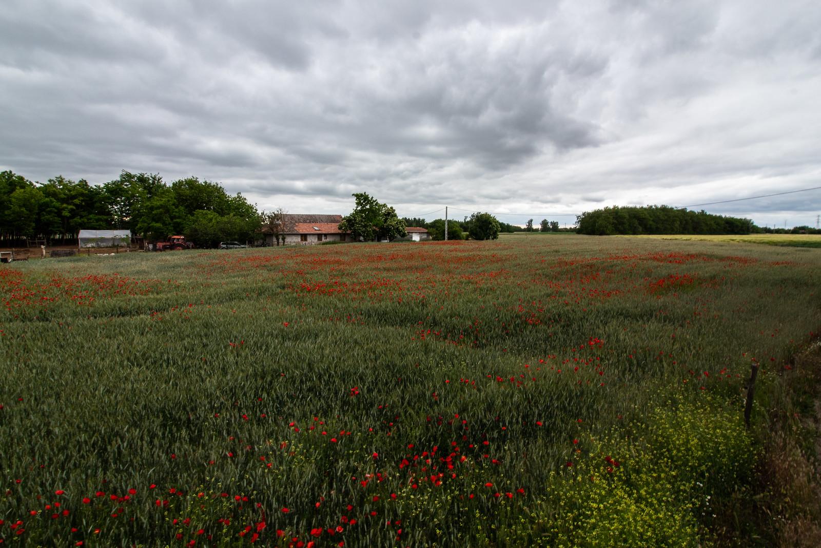 Jó reggelt, Csongrád-Csanád megye!