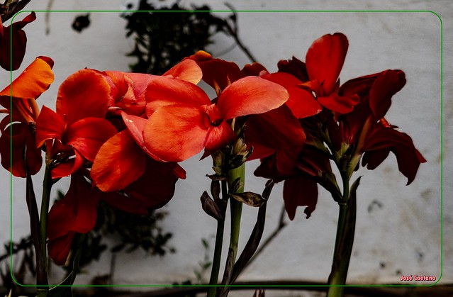 IMG_2228_Red Flowers