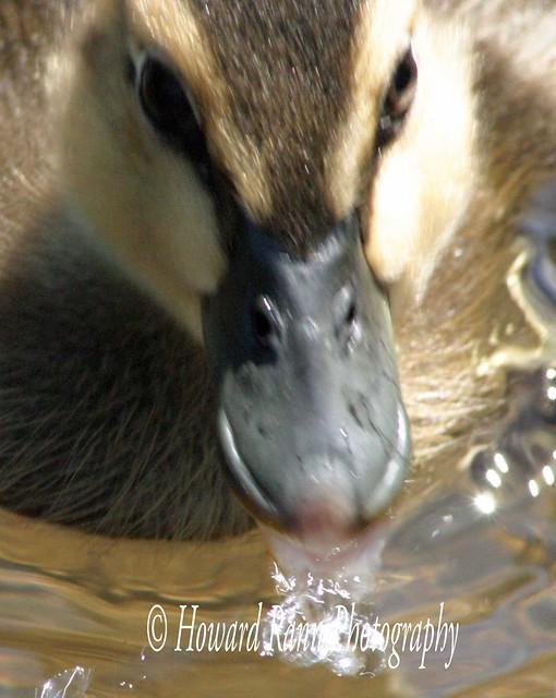 Benton Ducks (67)