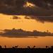 Kenya's fauna in the last light