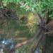 Pleasanton Canal-1060079.jpg