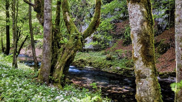 Potok Curak ovoga proljeća (2)