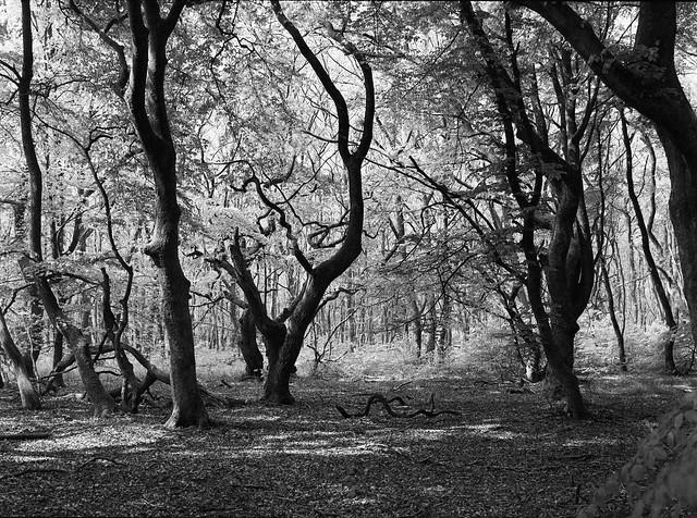 Sceneri i Troldeskoven