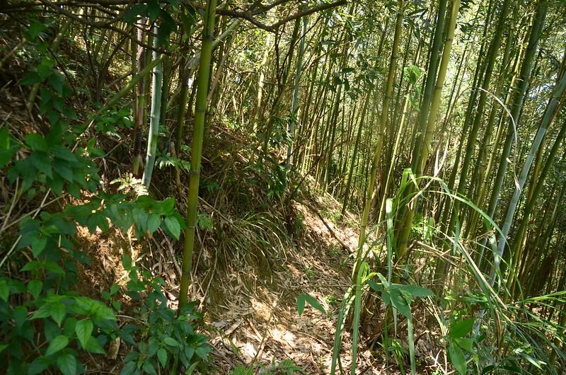 頭寮坑山竹林腰繞段