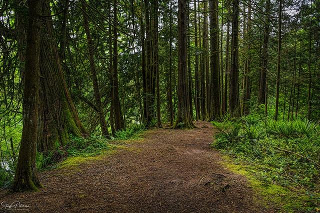 Upper Maple Ridge Park Trails