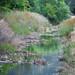 Pleasanton Canal-1060089.jpg