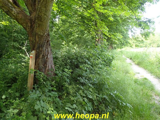 2020-06-03     Hollandse-Hout -    Klokbekerweg    (59)