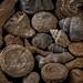 Fósiles del Montsec