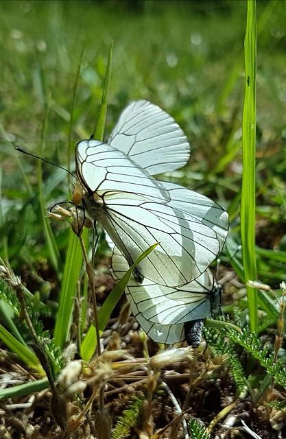 L'amour à tire d'ailes