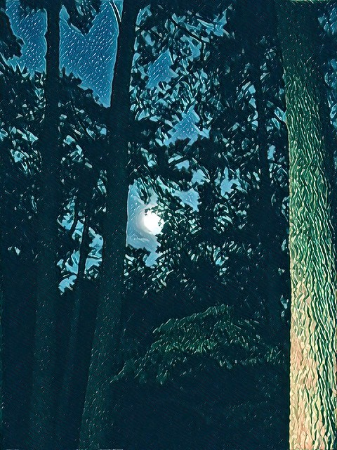 Moonlight through the trees🌕🌖 🌲