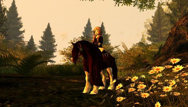 Elite Equestrian's Mini Gypsy Vanner