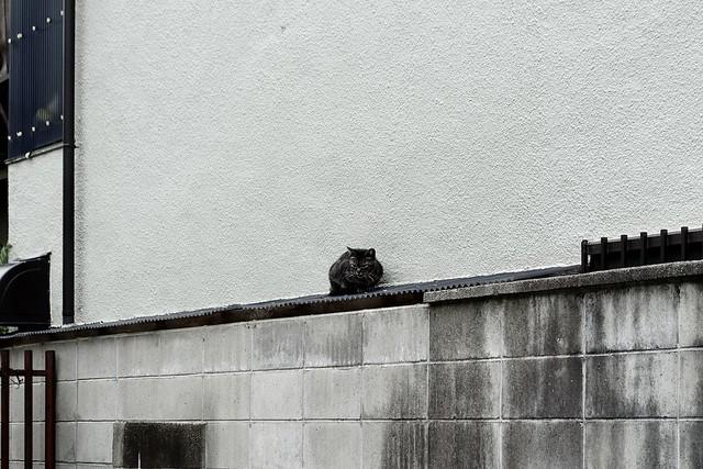 Today's Cat@2020ー06ー04
