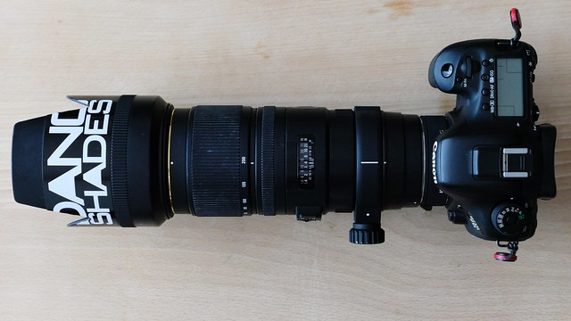 SIGMA 70-200mm F2.8 EX DG OS HSM + TELE CONVERTER 1.4x + Canon EOS 7D Mark2 = 448mm (35mm Equivalent Focal Length).