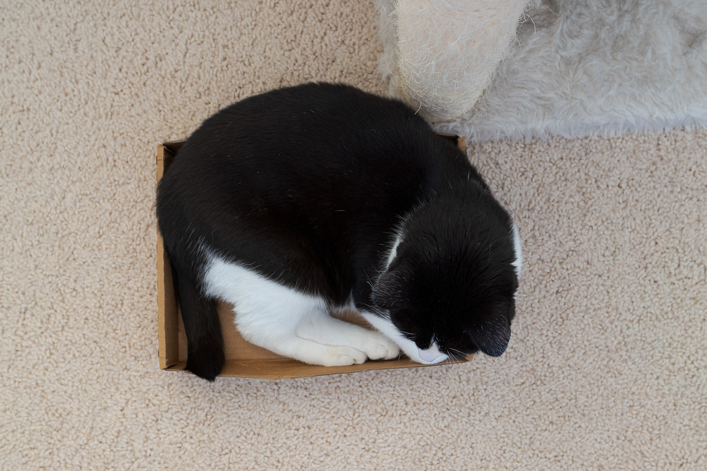 An overhead view of our cat Boo sleeping in a slightly too small cardboard box in May 2020