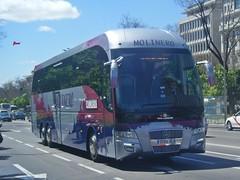 Tata Hispano Xerus Mercedes de Molinero