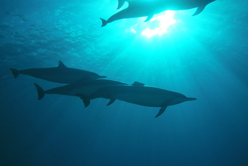 dolphins in sunlight