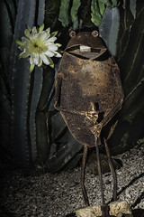 The Rusty Frog And The Night Blooming Cactus Flower