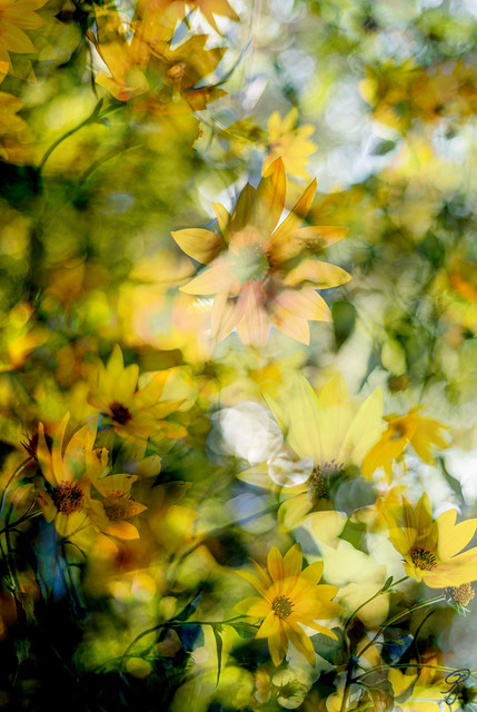 Wild flowers merged into one others (explored)