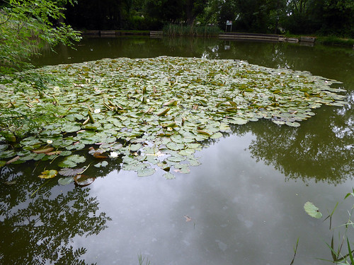 Little Apley Pool