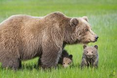 Fortress Mama Bear