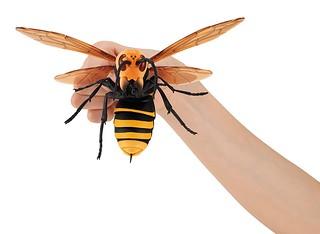 最危險昆蟲強勢襲來!GASHAPON 超擬真「虎頭蜂」轉蛋(すずめばち)全三種