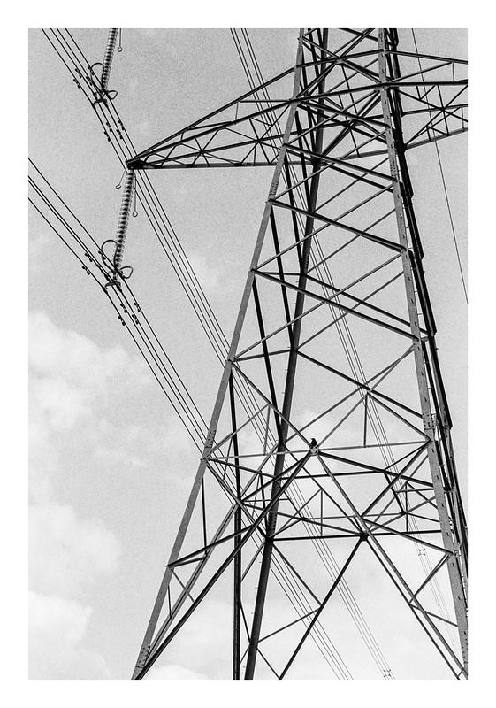 Crow on a pylon