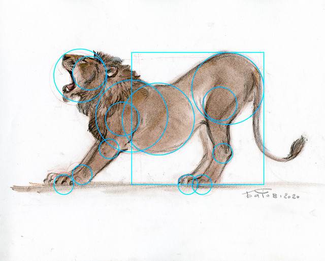 20200604_Lion_002_Rings