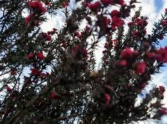 Winter flora.