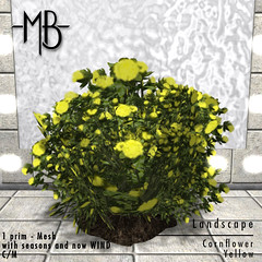 Cornflower yellow w