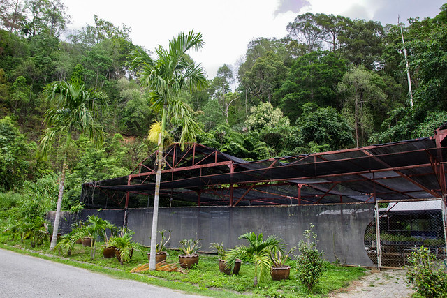 Jardin botanique de la reine Sirikit (138 sur 138)