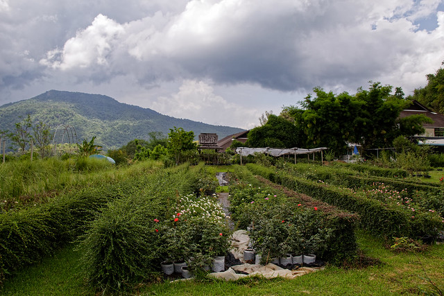 Jardin botanique de la reine Sirikit (134 sur 138)