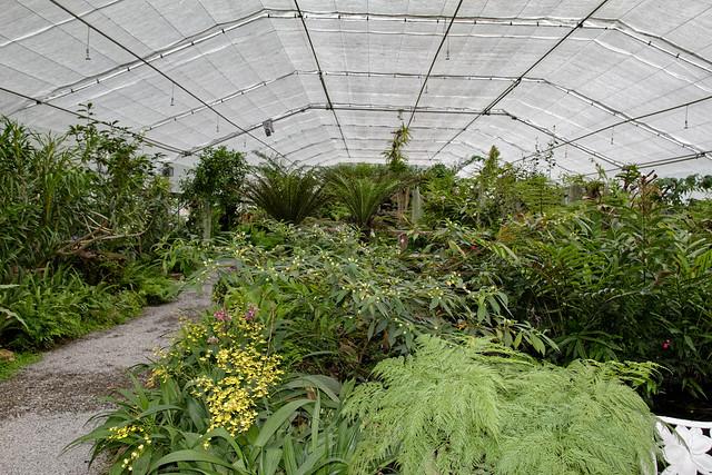Jardin botanique de la reine Sirikit (103 sur 138)