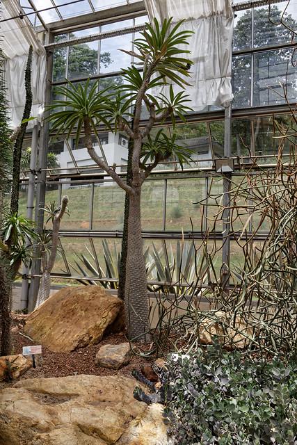 Jardin botanique de la reine Sirikit (52 sur 138)
